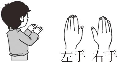 左右手背图片