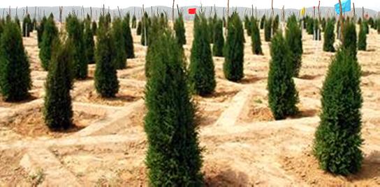 关于植树造林的宣传标语图片